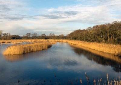 SWT Wetlands